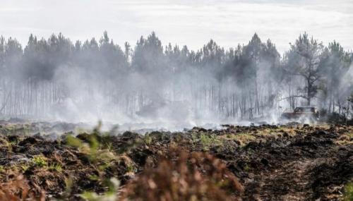 Un incendie maîtrisé dévaste 74 hectares de végétation à M'diq