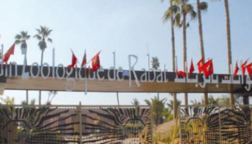 Une fille de 7 ans tuée par un éléphant au zoo de Rabat