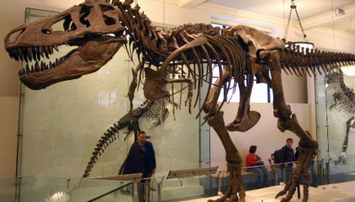Le squelette du dinosaure volé au Maroc a été restitué