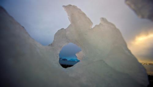 L'Antarctique verdit rapidement sous l'effet du changement climatique