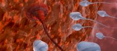 Le sperme peut abriter au moins 27 virus !