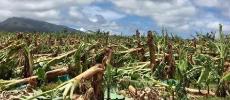 Ouragan Maria : Vent de colère suite à l'arrêté de catastrophe naturelle
