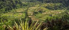 Bali : 50.000 personnes évacuées en prévision de l'éruption d'un volcan