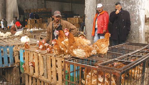 Les raisons derrière le refus d'importation du poulet marocain par l'UE