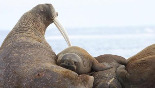 L'administration Trump refuse de protéger 25 espèces animales
