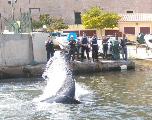 Public Buzz : une baleine de 15 mètres coincée dans le port de Marseille...
