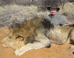Les pétitions en ligne : Dernier espoir des animaux en voie d'extinction ?