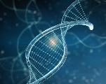 Actualité : Une modification génétique réalisée pour la première fois chez l'homme