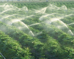 Pluviométrie: le Maroc se dirige-t-il vers une année agricole blanche?