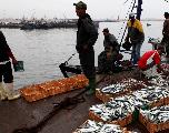 La Commission européenne va négocier un nouvel accord de pêche avec le Maroc