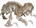 Les dicynodontes ont bien coexisté avec les dinosaures