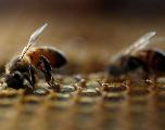 «Il est temps d'arrêter le grand manège des pesticides!»