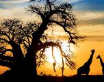Sur tous les continents, la nature et le bien-être humain sont en danger