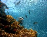 Les canicules marines menacent les écosystèmes aquatiques