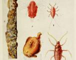 Qu'est-ce que le shellac, additif issu d'insectes retrouvé dans des aliments par l'ONG Foodwatch