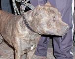 Ouislane : Trois balles de sommation pour neutraliser un multirécidiviste et son dangereux chien