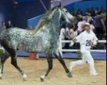 Le Salon du Cheval d'El Jadida: 11 ans déjà!