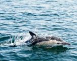 Plus de 1.100 dauphins échoués sur la côte atlantique depuis janvier