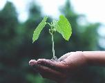 Nador : La 5ème Semaine Verte, du 05 au 11 août