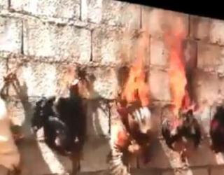 Une vidéo de poules en feu enflamme les réseaux sociaux