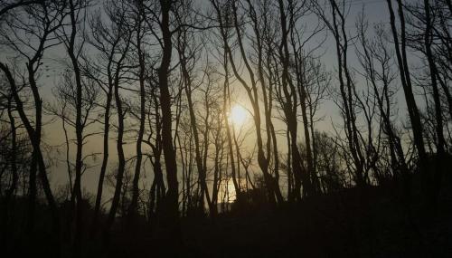 Sur Terre, les surfaces boisées mondiales se réduisent à peau de chagrin