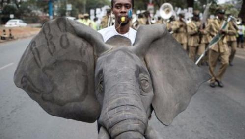 L'administration Trump autorise à nouveau l'importation de trophées d'éléphants !