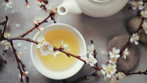 Le thé blanc, cette boisson aux mille vertus