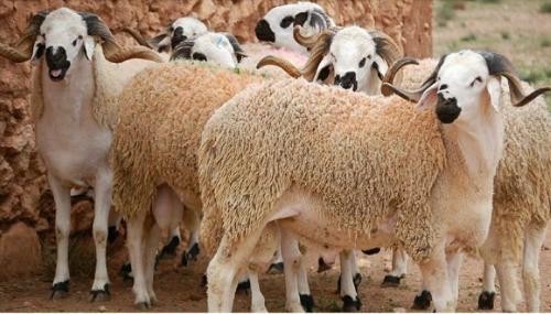 Covid-19 : Le gouvernement impose des mesures spéciales pour Aid Al Adha