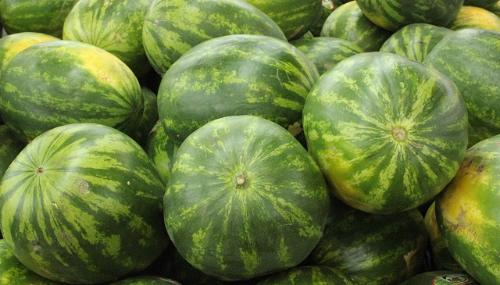 Pastèques : Les semences utilisées ne sont pas génétiquement modifiées, selon l'ONSSA