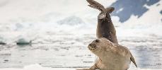 Bientôt un immense sanctuaire marin en Antarctique ?