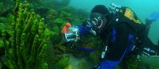 La biodiversité du célèbre lac Baïkal menacée par la pollution