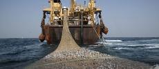 Pêche. Quatre pays africains rejoignent la FITI