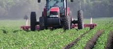 Campagne agricole: l'impact des dernières pluies