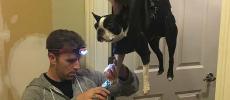 Un Américain trouve une astuce hilarante pour couper les griffes de son chien