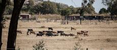 Le Parlement sud-africain ouvre la voie à l'expropriation sans compensation des terres