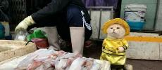 Dog, le chat vendeur de poisson au Vietnam séduit le web