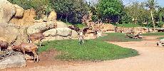Le zoo d'Aïn Sebaâ sera livré en septembre 2018 : Le projet est réalisé à hauteur de 78%