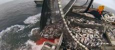 Accord de pêche: le Royaume triomphe à Bruxelles