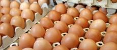 Œufs de consommation : Le secteur perd 3,5 MDH par jour