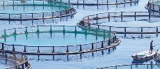 Pour accompagner l'essor du secteur : Bientôt une nouvelle stratégie pour l'aquaculture